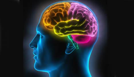 Visuel du cerveau de l'homme