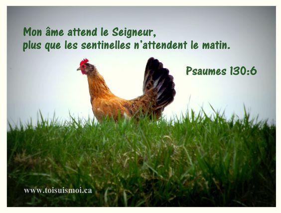 87ee5a53d8e7b4b1844bbd602538a318--le-coq-la-bible