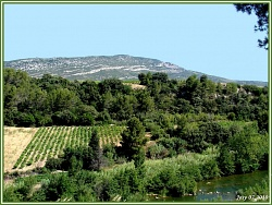 to_80-corbieres-paysage