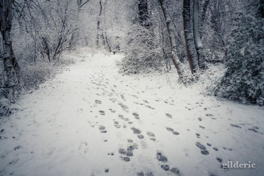 Pas dans la neige.jpg